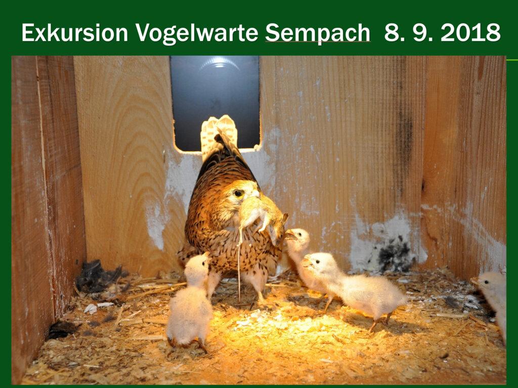 E004-Vogelwarte Sempach 2018