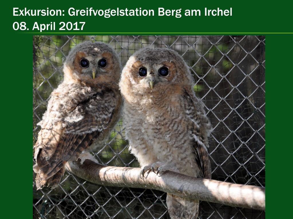 E006-Greifvogelstation Berg a Irchel 2017