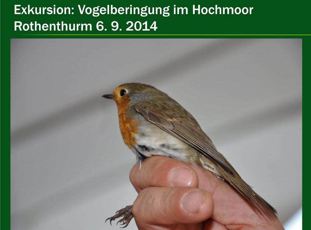 E011-Vogelberingung Rothenturm 2014
