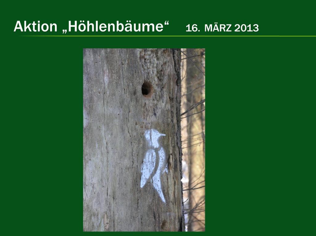 E015-Höhlenbäume 2013